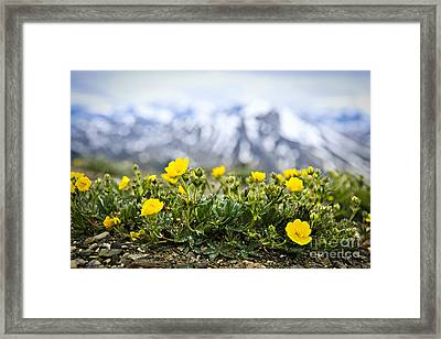Alpine Meadow In Jasper National Park Framed Print by Elena Elisseeva