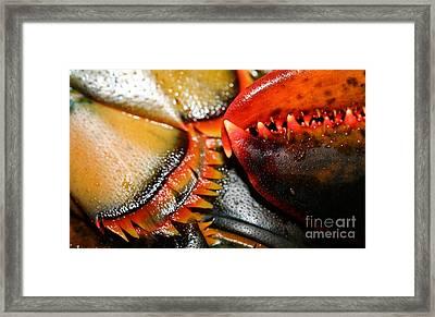 American Lobsters Framed Print by Matt Suess