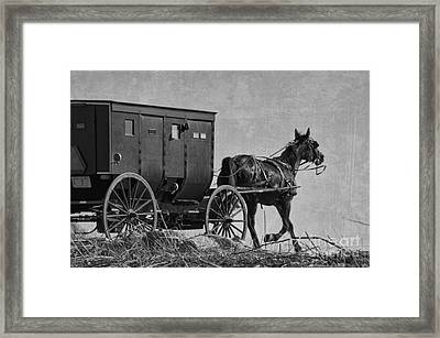 Amish Buggy Black And White Framed Print