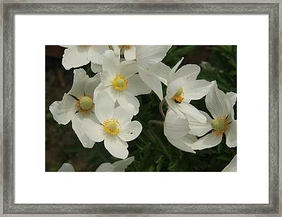 Anemonies Framed Print