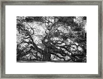 Framed Print featuring the photograph Angel Oak by Lynne Jenkins