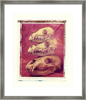 Animal Skulls Framed Print