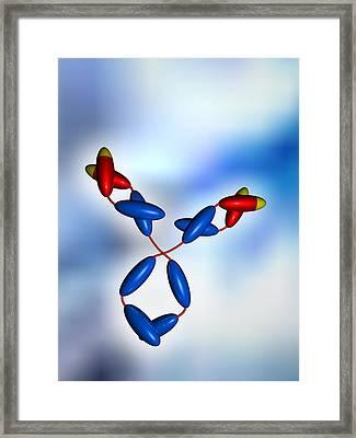 Antibody Framed Print by Pasieka