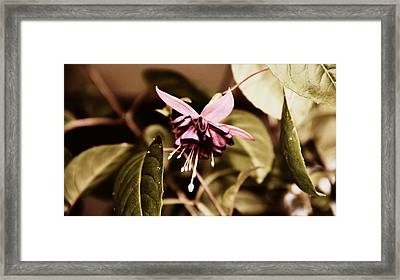 Framed Print featuring the photograph Antiqued Fuchsia by Jeanette C Landstrom