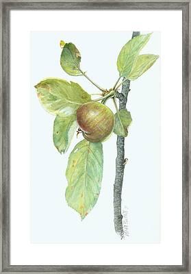 Apple Branch Framed Print by Scott Bennett