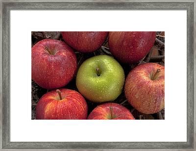 Apples Framed Print by Joana Kruse