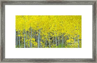 Aspen Power Framed Print