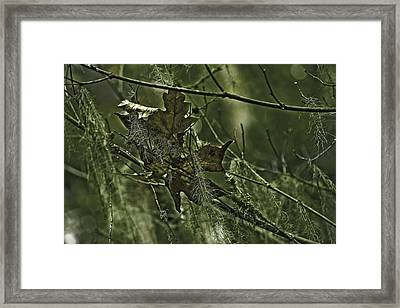 Attached Framed Print by Bonnie Bruno