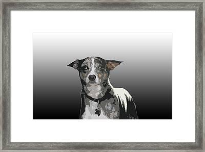 Australian Cattle Dog Sheltie Mix Framed Print by One Rude Dawg Orcutt