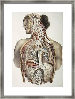 Autonomic Nerves, 1844 Artwork Framed Print by