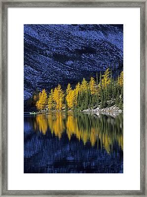 Autumn, Alpine Larch Trees, Lake Agnes Framed Print by John Sylvester