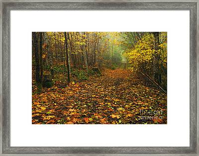 Autumn Lane Framed Print by Mike  Dawson