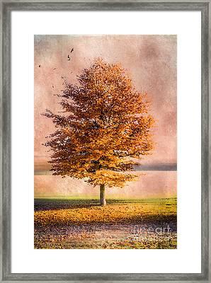 Autumn Light Framed Print by Hannes Cmarits
