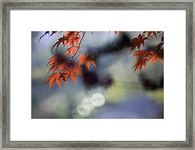 Autumn Red  Framed Print by Rob Travis