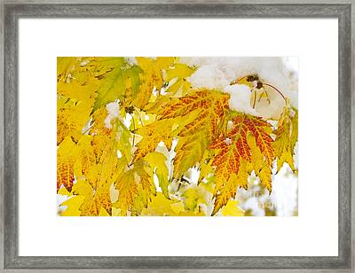 Autumn Snow  Framed Print by James BO  Insogna