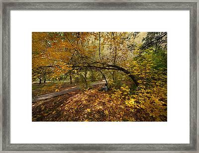Autumn Tree Framed Print by Svetlana Sewell