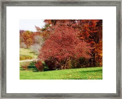 Autumn Trees Framed Print by Sandy Keeton