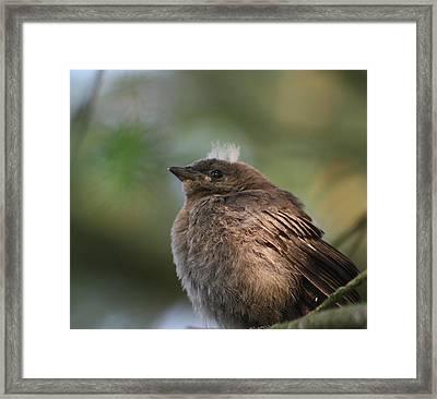 Baby Bird Framed Print by Cathie Douglas