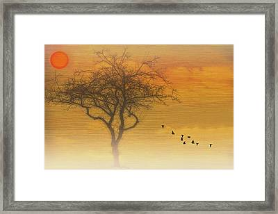 Back To The Nest Framed Print by Tom York Images