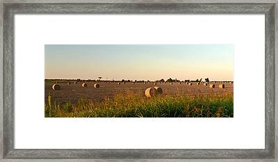 Bales In Peanut Field 2 Framed Print by Douglas Barnett
