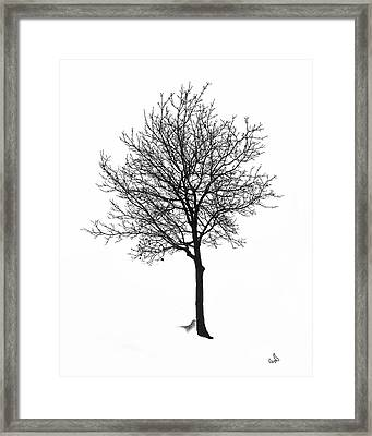 Bare Winter Tree Framed Print