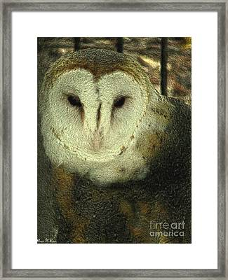 Barn Owl  Framed Print by Donna Brown