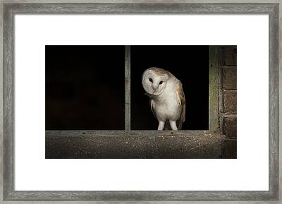 Barn Owl In Window Framed Print by Andy Astbury