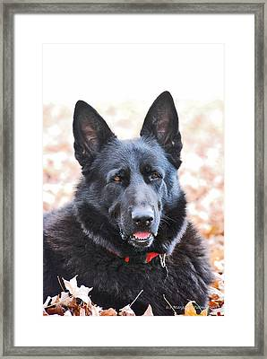 Bear Framed Print by Margaret Palmer