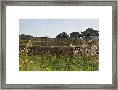 Beautiful California Vineyard Framed With Flowers Framed Print