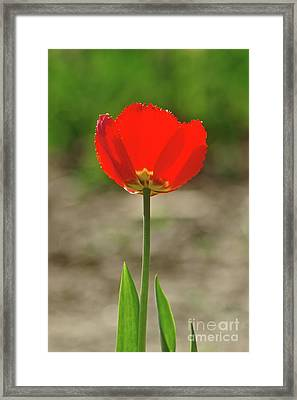 Framed Print featuring the photograph Beauty In Red by Dariusz Gudowicz