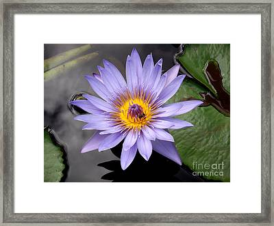 Framed Print featuring the photograph Bee With Me by Ayasha Loya