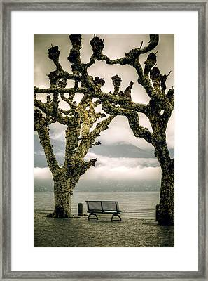 Bench Under Plane Trees Framed Print by Joana Kruse