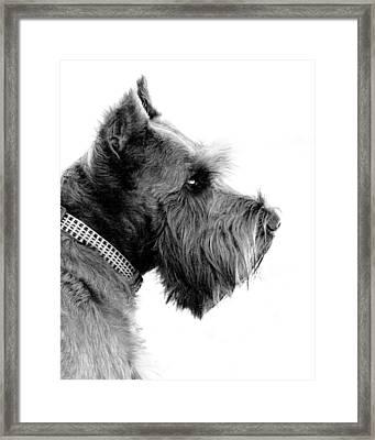 Benny Framed Print by Mickey Harkins