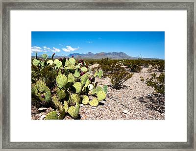 Big Bend Framed Print