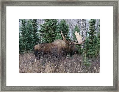 Framed Print featuring the photograph Big Boy by Doug Lloyd