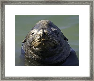 Framed Print featuring the photograph Big Face by Betty Depee