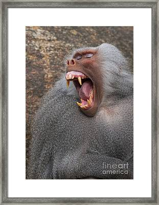 Big Teeth Framed Print by Andrew  Michael