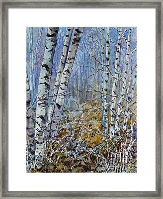 Birches Framed Print by Louise Peardon
