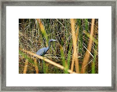 Framed Print featuring the photograph Bird At Viera by Jeanne Andrews