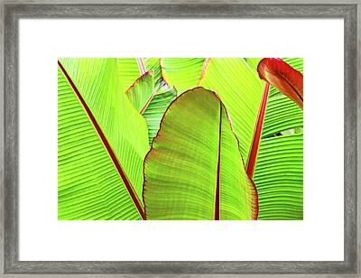 Bird Of Paradise Framed Print by Ann Murphy