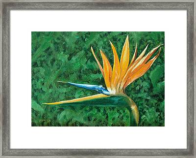 Bird Of Paradise Framed Print by Charles Yates