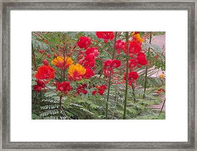 Bird Of Paradise Desert Framed Print