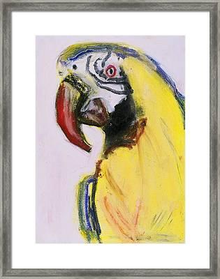Bird Portrait 1 Framed Print by Iris Gill