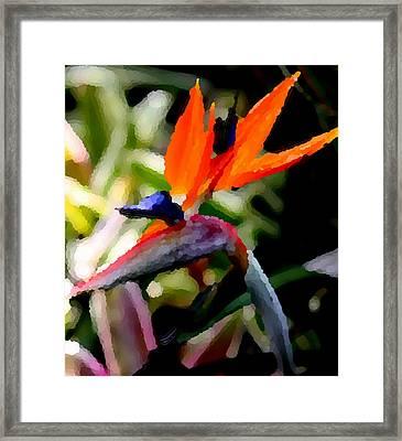 Birds Of Paradise  Framed Print by Elizabeth  Doran