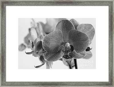 Black And White Orchid Framed Print