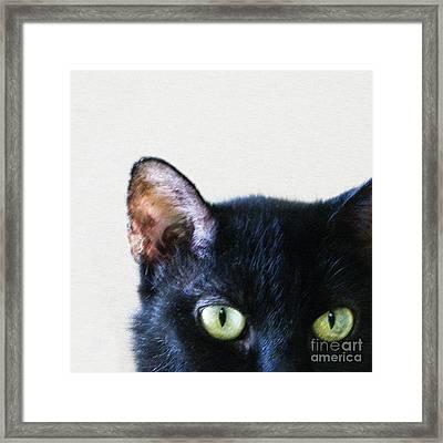 Black Cat Green Eyes Framed Print by Glennis Siverson