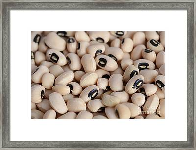 Black Eyed Bean Framed Print by Photo Researchers, Inc.
