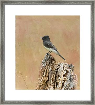 Black Phoebe Framed Print by Betty LaRue