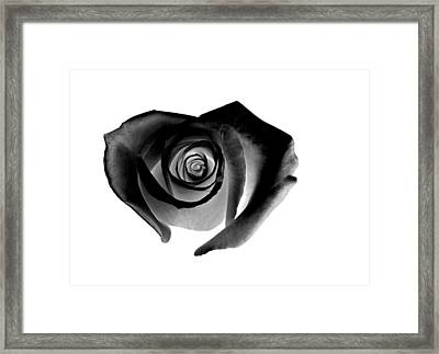 Black Rose Framed Print by Glennis Siverson