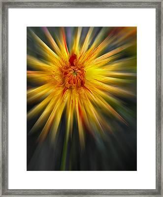 Dahla Blast Off Framed Print by Jean Noren